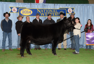 14-Champion-Percentage-Simmental-Heifer-National-western-Stock-Show-Audrey-Schneiderer