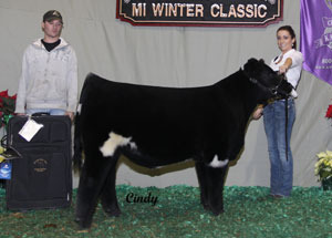 10-champ-append-shorthorn