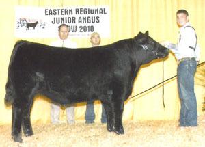10-champion-steer-easternregional