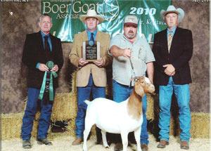 10-dowells-boer-goat