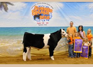 10-grand-champ-prospect-steer-national-maine-anjou