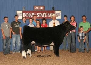 10-idiana-state-fair-steer