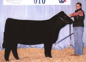 10-junior-champ-heifer-katie-mcninich