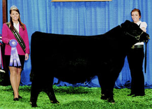 10-sterling-bull-naile