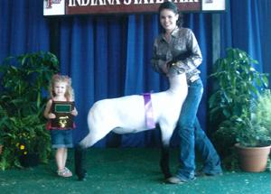 11-ch-medium-weight-market-lamb-indiana-state-fair