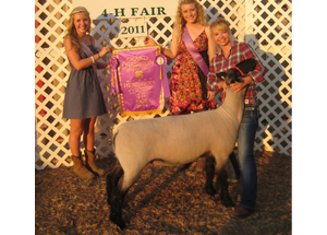 11-champ-ewe-hendricks-county-fair