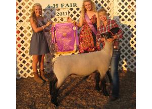 11-champ-ewe-hendricks-county-fair