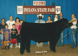11-champ-maine-steer-indiana-state-fair-samantha-brooke