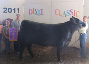 11-champ-open-angus-dixieclassicfair