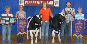 11-champ-res-champ-dairy-steers-indiana-state-fair
