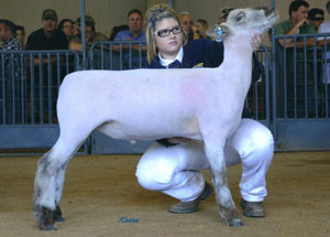 11-champion-southdown-california-state-fair