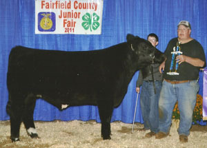11-grand-born-bred-steer-farifield-co-justin-taylor