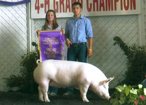 11-grand-champ-4h-vigo-county