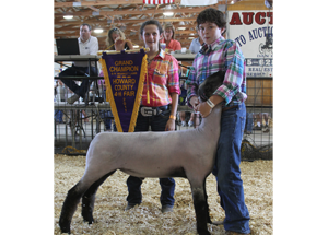 11-grand-champ-lamb-howard-co-luke-shepherd