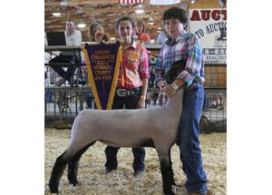 11-grand-champ-lamb-howard-co-luke-shepherd