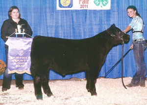 11-grand-feeder-calf-fairfield-co-lindsey-miller