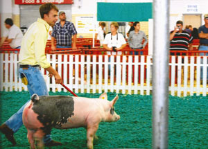 11-grand-gilt-meade-co-fair-alex-richardson (1)