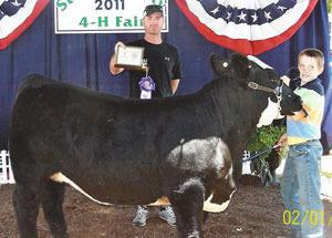 11-grand-heifer-starkeco