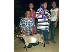 11-grand-pygmy-goat-brown-county-fair