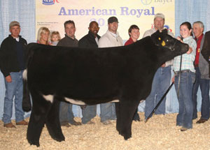 11-grand-steer-americanroyal