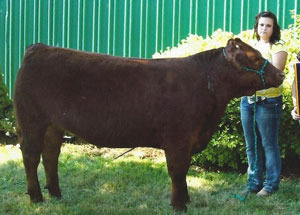 11-grand-steer-randolphco