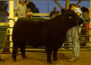 11-grandchampionmarketsteer-lawrencecounty-joshcraft