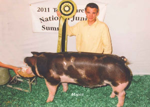 11-res-bred-owned-spot-barrow-cps