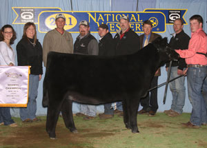 11-res-champ-highmaine-heifer-nwss-cameron-alexander