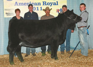 11-res-champ-jr-simmi-heifer-american-royal-hall-simmis