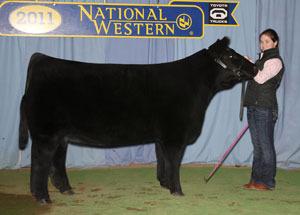 11-res-champ-market-heifer-NWSS