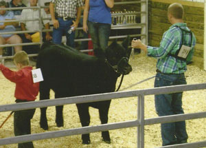 11-res-grand-heifer-harrison-co-tyler-shewmaker