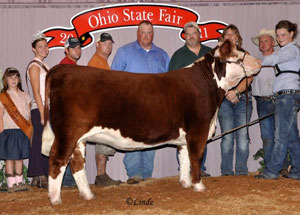 11-res-hereford-heifer-ohio-state-fair-kayla-alexander