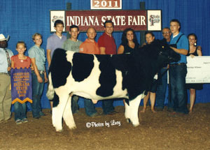 11-reserve-grand-market-steer-indiana-state-fair