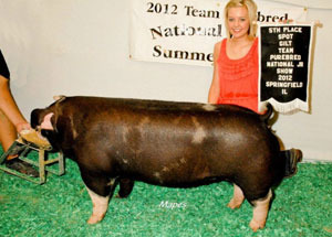 12-class-winner-11-of-15-icpa-circuit-show-christine-todd-edited