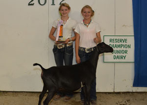 12-grand-and-res-champ-dairy-doe-laporte-county-baily-ann-cook