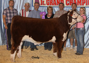 12-grand-champ-hereford-steer-illinois-state-open-show-taylor-donelson