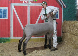 12-grand-champ-market-lamb-big-fresno-hunter-ward