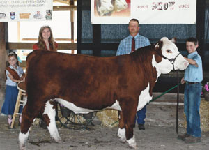 12-grand-champ-market-steer-buckeye-hereford-preview-show-cody-wright