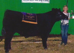 12-grand-champ-market-steer-holmes-county-jallyn-gauque