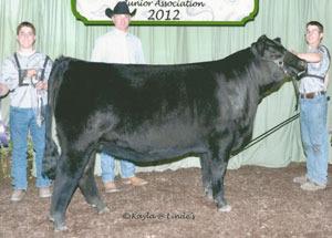 12-grand-champ-purebred-heifer-indiana-state-simmental-show-justin-frasa