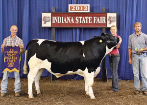 12-grand-champion-dairy-steer-indiana-state-fair-melissa-smoker