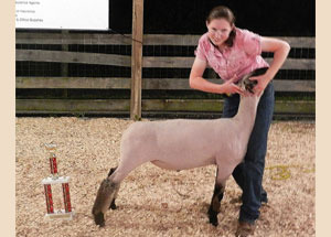 12-grand-champion-maket-lamb-tollesboro-lions-fair-michaela-caudill