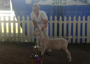 12-grand-champion-market-got-morgan-county-fair-samantha-mchugh