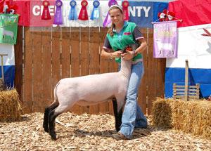 12-grand-champion-market-lamb-clermont-county-fair-elysha-thoms