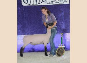 12-grand-champion-market-lamb-kankakee-county-fair-brooke-haag