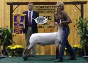 12-grand-champion-market-lamb-naile-samantha-raute