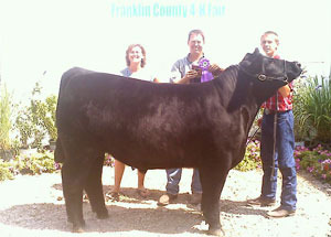 12-grand-champion-market-steer-frankling-county-fair