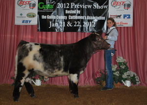 12-reserve-grand-champion-shorthorn-steer-overall-oca-best-program-taylor-morbitzer