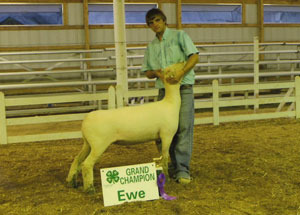 12-supreme-champion-ewe-and-reserve-grand-maket-lamb-jackson-county-fair-spencer-smith