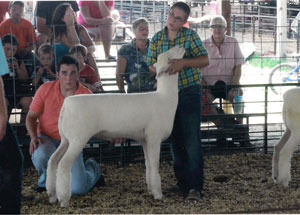 12-supreme-champion-ewe-clark-county-fair-thomas-crome